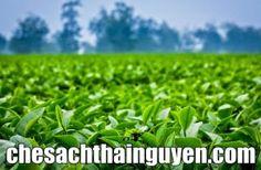 Đại lý Chè Thái Nguyênngon là cái tên mà chắc hẳn không cần phải giới thiệu nhiều với các bạn có sở thích uống trà người Việt. Chính vì quá nổi tiếng, giá thành tốt nhưng lợi nhuận cao khiến nhiều gian thương lợi dụng lòng tin của khách hàng, đã trà trộn những dòng …