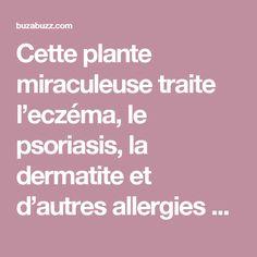 Cette plante miraculeuse traite l'eczéma, le psoriasis, la dermatite et d'autres allergies cutanées ! – Buzabuzz