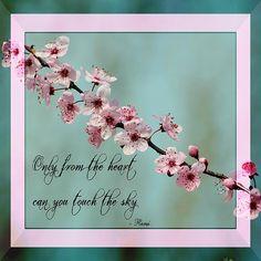rumi quote spring floral