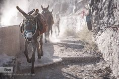Donkeys of Santorini by andreaspy. Please Like http://fb.me/go4photos and Follow @go4fotos Thank You. :-)