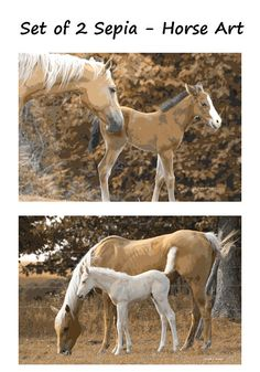 Sepia Horse Art Southwestern Palomino Farmhouse by GrayWolfGallery My Horse, Horse Art, Horses, Artwork Prints, Canvas Prints, Moose Hunting, Western Homes, Palomino, Large Prints