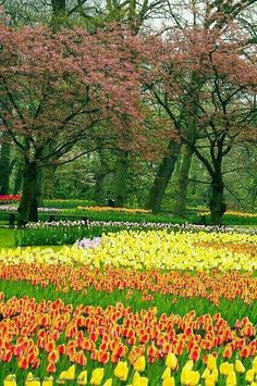 Bosque con tulipanes