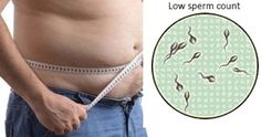obesity and low sperm count , does obesity cause low sperm count ? Studies have revealed that obese men have low sperm counts. Several reasons have been quoted for the same. Read More