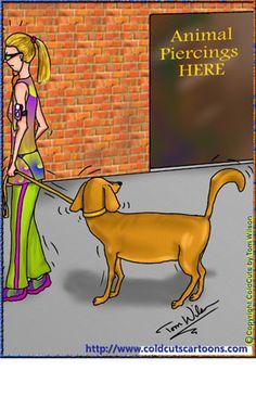 Dog watching animal piercing shop