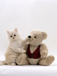 Kittens! Teddy Bears! What more could you ask for .........?  LOL