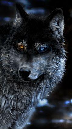 Wolf Heterochromia Fantasy In Resolution Wolf Photos, Wolf Pictures, Beautiful Wolves, Animals Beautiful, Wolf Warriors, Alpha Wolf, Wolf Artwork, Fantasy Wolf, Wolf Spirit Animal