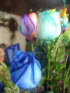 ¿te gustaria iniciar el miercoles recibiendo una de estas bellas rosas? Feliz dia amigos