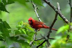 លទ្ធផលរូបភាពសម្រាប់ Bird and nature
