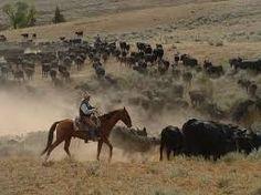 Bildergebnis für ranch horse USA Ranch, Cow, Horses, Animals, Guest Ranch, Animales, Animaux, Cattle, Animal