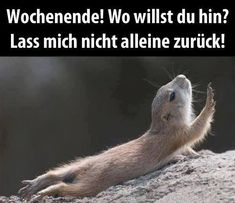 Mehr lustige Bilder und Sprüche zum lachen gibt es hier: http://lachlos.ch