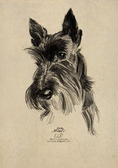 Scottie portrait Pencil drawing OHTO sharp pencil Japan Scottie in traditional uniform with a bagpipe digital illustra. Animal Drawings, Pencil Drawings, Hair Drawings, Schnauzer Art, Dog Paintings, Watercolour Paintings, Watercolor, Terrier Dogs, Bull Terriers