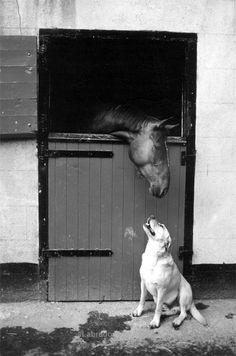 labrador retrievers are the best dogs.#labradorretrievers #dogs