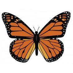 ¿qué hacia esta mariposa en mi jardín?