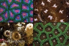 New species of zoanthids aren't described all that often, but it turns out that we should be paying more attention to this understudied group of reef anima