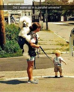 Parallel universe #funnydogmeme