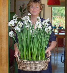 Give our potted Narcissus Paperwhite gift set this Christmas. We will plant the bulbs for you in our lined willow basket, topped with real moss.