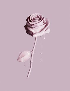 rose-paint-pastel-colour-pink-still-life-creative-photographer-london-3.jpg