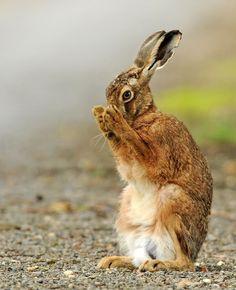 Hare Preservation Trust