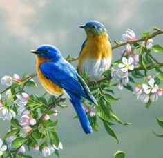 Lovely bluebirds