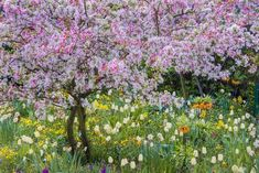 France, Giverny. Springtime in Claude Monet's Garden Photographic Print by Jaynes Gallery at AllPosters.com