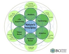 Nature's Principles- another way for a graphic representation