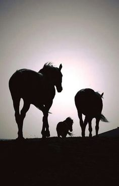 Goodnight riders, horses heading out.