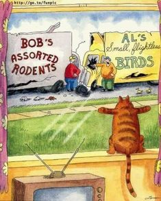 Far Side Cartoons, Far Side Comics, Funny Cartoons, Funny Comics, Funny Cats, Funny Animals, Cute Animals, Cats Humor, Memes Humor