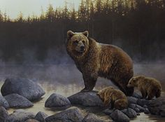 Beautiful #grizzly #bear