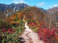 遠見尾根から五竜岳|北アルプス登山ルートガイド。Japan Alps mountain climbing route guide