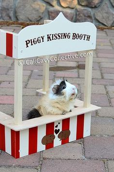 A guinea pig kissing booth! soooo cute!!   need to make this for my hammy!