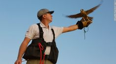 Falconry displays are part of the experience. Trained birds swoop low over heads, ruffling hair with their large wing beats but never touching spectators. Dubai Activities, Desert Safari Dubai, Fun Deserts, Beats, Trip Advisor, Retro, Places, Garden, Hair