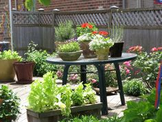 Surprisingly pretty Herbs and Veggies in pots Free Advice, Harvest, Garden Design, Design Inspiration, Herbs, Charmed, How To Plan, Veggies, Pretty