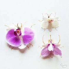 Alien bugs. When I was young, orchids look like alien faces to me. But now, I am crazy about them!