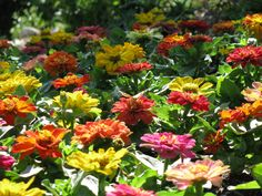 Small Flower Garden Ideas >>> You can get additional details at the image link.