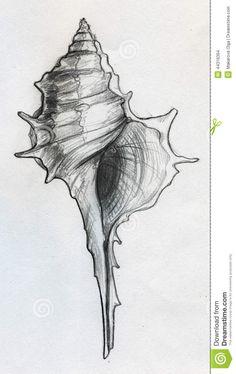 рисуем ракушку карандашом поэтапно - Google Search