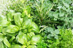 Doctor Natura: Ce plante condimentare sunt specifice gastronomiei...