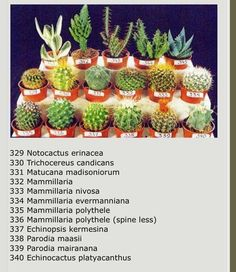 succulents/cactus Bridal Lingerie on Your Wedding Night Article Body: Is your wedding night coming u Types Of Succulents, Succulents In Containers, Cacti And Succulents, Planting Succulents, Cactus Plants, Planting Flowers, Cactus Names, Succulent Names, Gardens