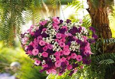 15 Plants Perfect for Hanging Baskets
