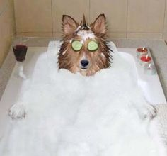 Hahaha... funny picture. But the shampoo is something I'll try for Mr. B, my golden.