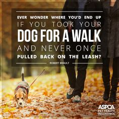 Where would your #dog take you?