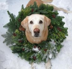 Christmas wreath, dog, snow
