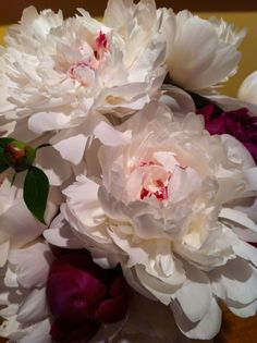 peony painting by Dennis Perrin