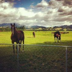 #horses #horse #indi #homies #dan #xracehorse #myboy #country #home #farm #farmer by _georgiapick