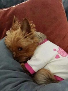 The Yorkie stink eye. My Yorkie used to give me this stink eye when he was in a bad mood Cute Puppies, Cute Dogs, Dogs And Puppies, Cute Babies, Poodle Puppies, Baby Dogs, Cute Baby Animals, Animals And Pets, Funny Animals