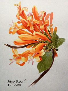 Honeysuckle flower, botanical watercolour by Thai artist. Honeysuckle Tattoo, Honeysuckle Flower, Botanical Flowers, Botanical Illustration, Botanical Prints, Watercolor And Ink, Watercolour Painting, Watercolor Flowers, Polychromos