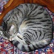 Cat urine has a strong smell and is one of the toughest odors to get rid of. When dealing with cat urine odor you do not want to mask or cover up the smell, you want to neutralize it so that it is eliminated. Urine goes through a decaying process the longer it sits in your carpet. This is from bacteria consuming wastes, and at the same time,...