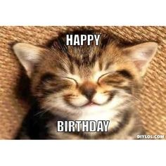 Happy birthday funny cats, cat birthday memes, cat birthday wishes, happy birthday coffee Cat Birthday Memes, Happy Birthday Funny Cats, Funny Happy Birthday Wishes, Happy Birthday Images, Birthday Quotes, Birthday Ideas, Birthday Kitty, Happy Birthday Animals, Birthday Humorous
