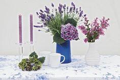 Proven Winners - Bloomerang® Purple - Reblooming Lilac - Syringa x purple lavender plant details, information and resources. Bloomerang Lilac, Syringa, Proven Winners, Lavender, Vase, Table Decorations, Interior Design, Purple, Plants