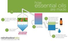 HERE'S HOW ESSENTIAL OILS ARE MADE Every wonder where those essential oils come from?  Here's a graphic of one way that essential oils are made.  This represents the steam distillation process for extracting essential oils.  Lavender essential oils is typically made using this process.  Please feel free to share this with anyone who might be interested.