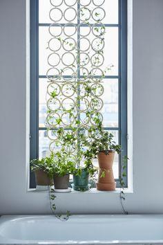 IKEA Deutschland | Wer hätte gedacht, dass man KOMPLEMENT auch außerhalb einem PAX nutzen kann. Hier z.B. in Kombination mit Pflanzen. #Dekoration #Pflanzen #KOMPLEMENT #Dekoinspiration